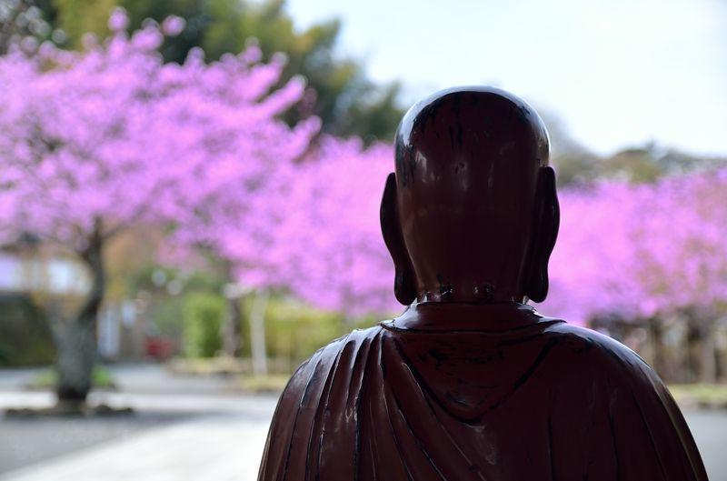 仏像も見守る桜