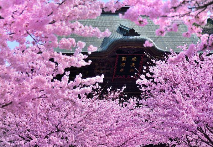 14.「名刹」日本の四季を満喫