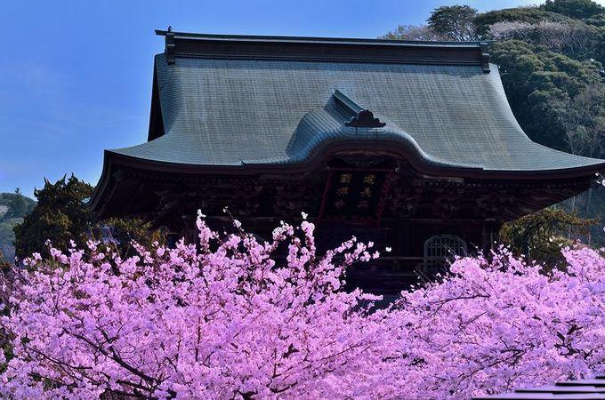 格式高き鎌倉五山の第一位「建長寺」は日本最古の禅寺