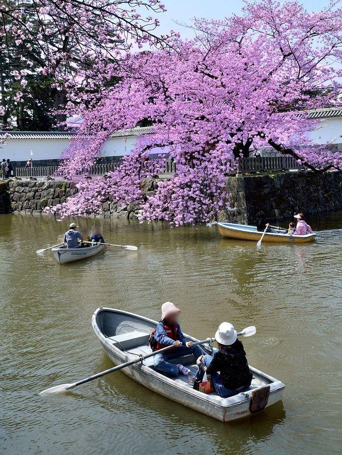 ボートで楽しもう!お堀から見上げる桜