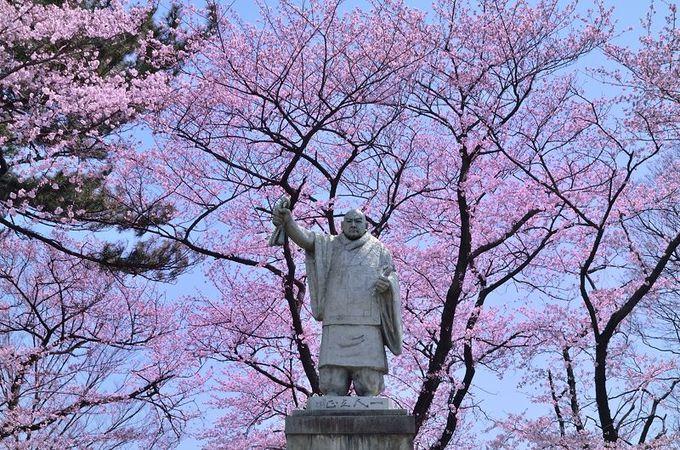 桜の下の日蓮聖人像
