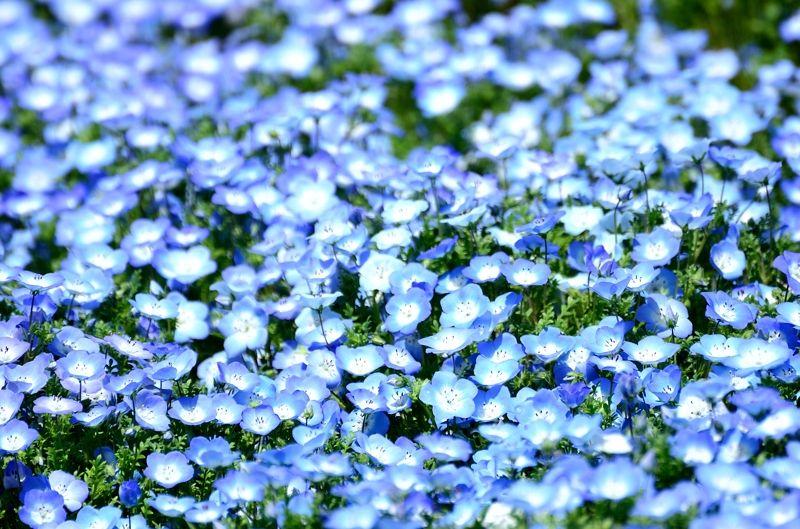 他にもいろいろ、昭和記念公園の春の花たち