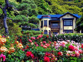 薔薇に囲まれてバラ色気分!行ってみたい有名バラ園10選