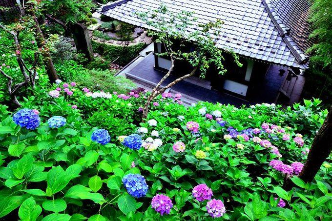 鎌倉を代表する「花の寺」