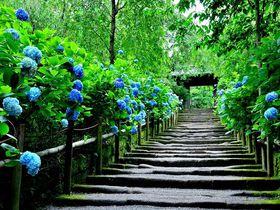 鎌倉観光で押さえたい!専門家おすすめ名所・散策スポット30選