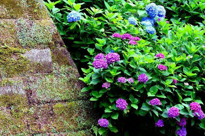 鎌倉五山2位の名刹、円覚寺