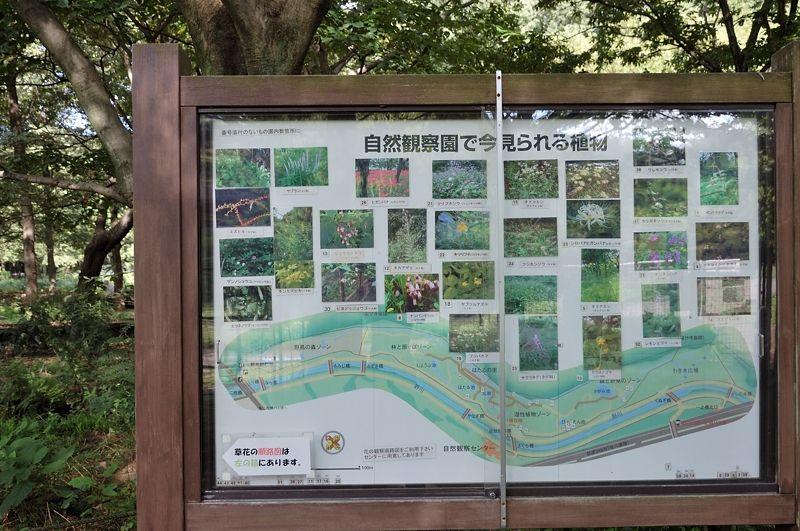 のどかな都立公園にある自然観察園