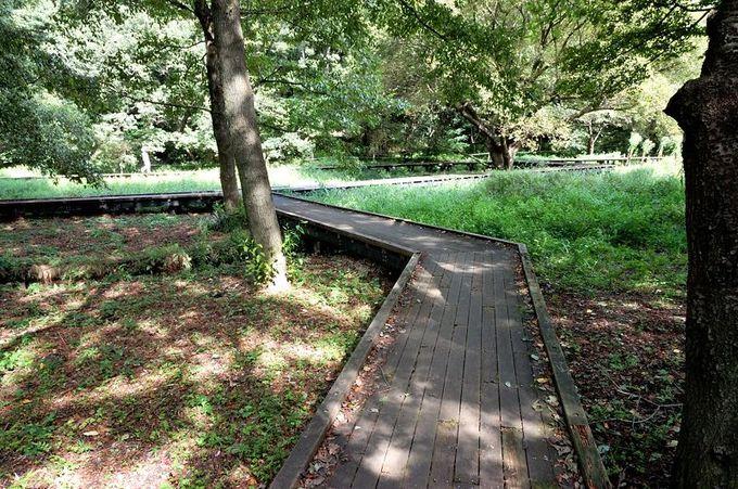 豊かな自然に囲まれた木道