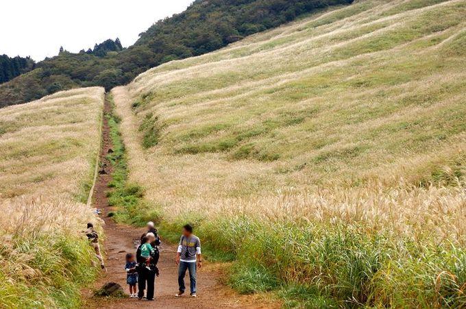 すすきの中を伸びる500メートルの遊歩道