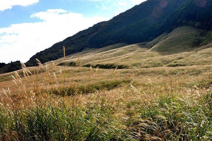 大地一面黄金色!すすき草原の絶景