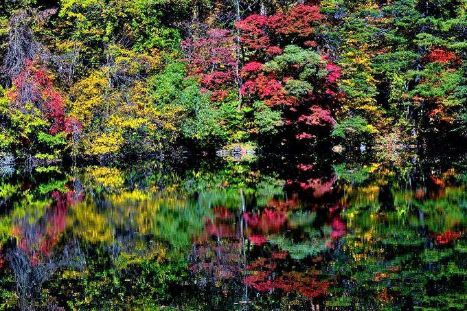 福島県・五色沼で紅葉×沼×磐梯山の絶景を堪能