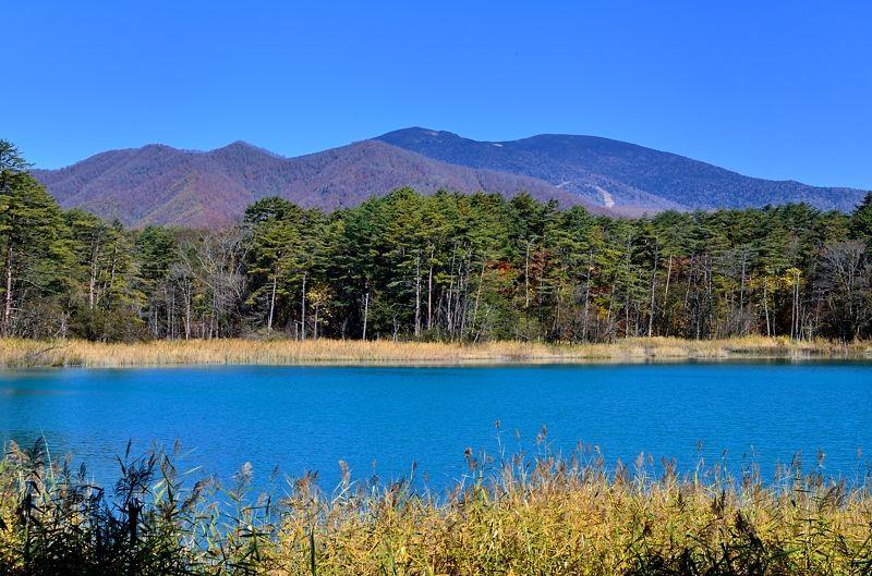 展望台から眺めるコバルトブルーの弁天沼