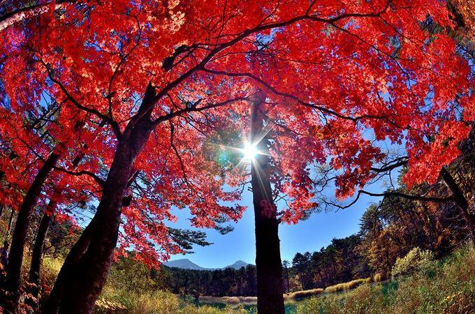 瑠璃沼で待つ秋の絶景