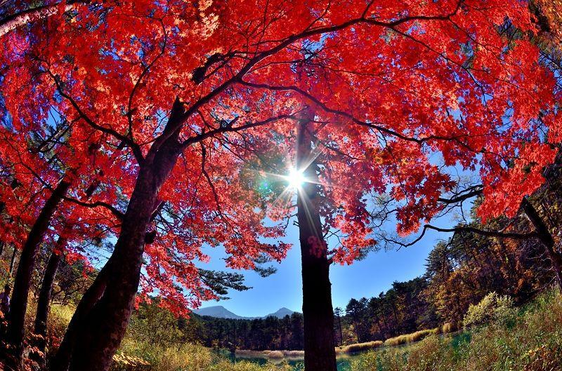 東北の秋は美しい!福島県・五色沼で紅葉×沼×磐梯山の絶景を堪能