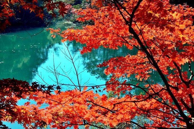 紅葉と沼の作り出すコントラスト