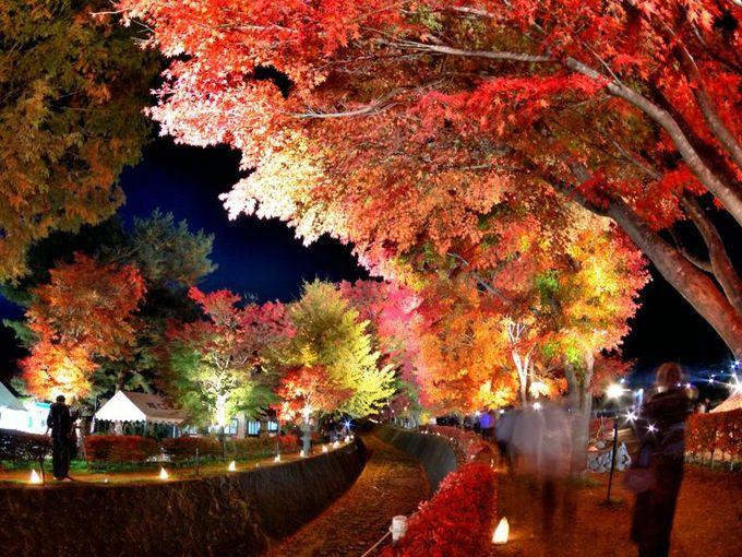 ライトアップも必見!「富士河口湖紅葉まつり」(山梨)