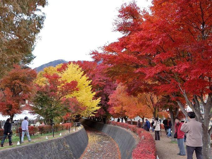 紅葉のトンネルを歩く「もみじ回廊」