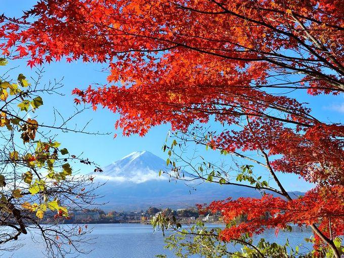 「富士河口湖紅葉まつり」も開催!秋の河口湖へ行こう!