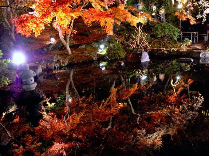 鎌倉の夜のおすすめ名所!長谷寺の紅葉ライトアップは圧倒的な幻想世界!
