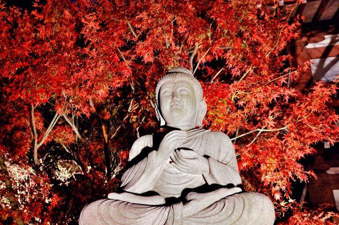鎌倉の夜の名所!長谷寺紅葉ライトアップは圧倒的な幻想世界(神奈川)