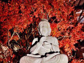 鎌倉の夜の名所!長谷寺の紅葉ライトアップは圧倒的な幻想世界!
