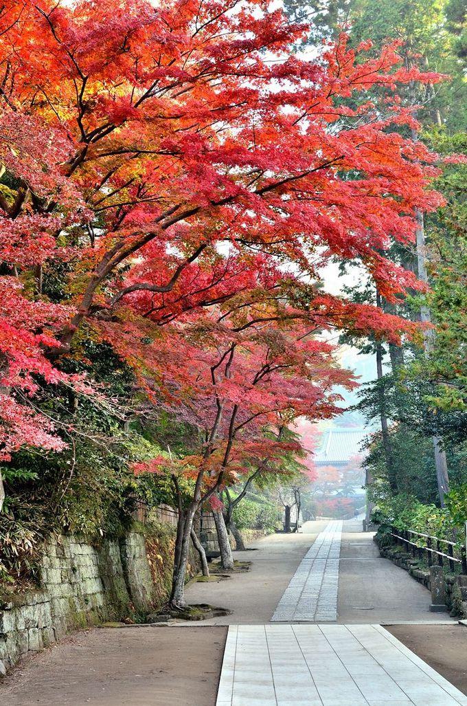 紅葉の下を歩く道