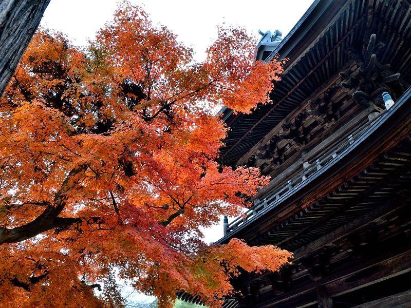 荘厳な三門と紅葉の織りなす古都の秋
