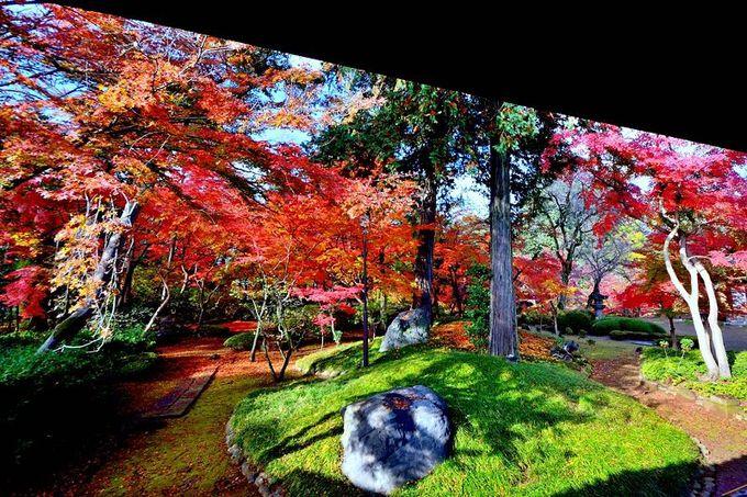 埼玉の紅葉名所といえばここ!川越「喜多院」で秋の色を満喫