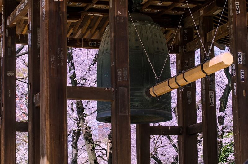 「江戸三大名鐘」を囲む桜
