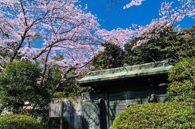 「徳川将軍家墓所」を見守る桜