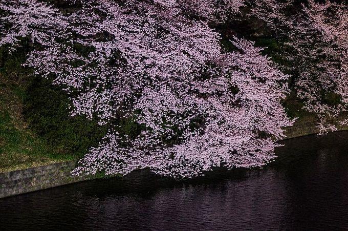 水面スレスレまでしだれる桜