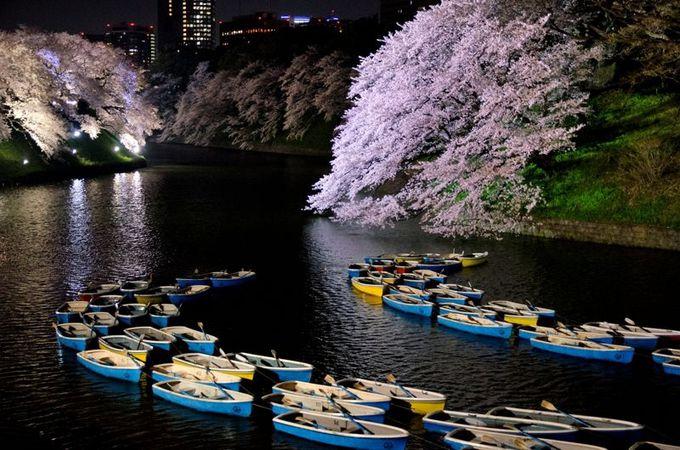 夜間も乗れる!ボートでの夜桜観賞もおすすめ!