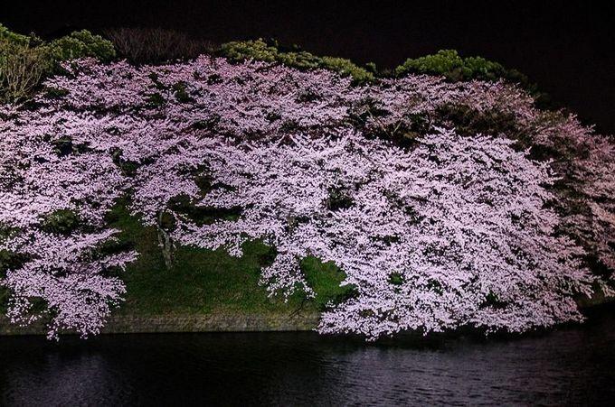 4.千鳥ヶ淵公園・緑道(千代田区)