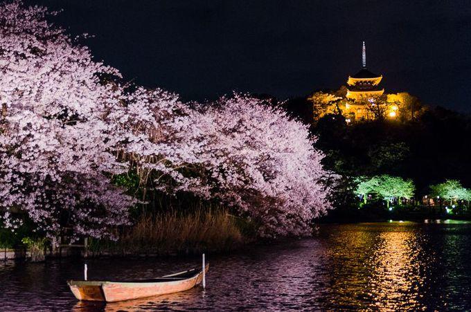 25.「桜の名所」最強のコラボ