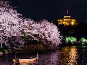 横浜「三渓園」の夜桜ライトアップが必見!「観桜の夕べ」を伝統的日本庭園で楽しもう!