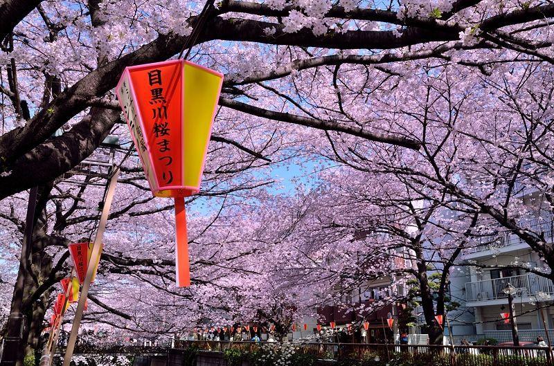 関東のおすすめ桜スポット10選 おさえておきたい春の絶景【2020】