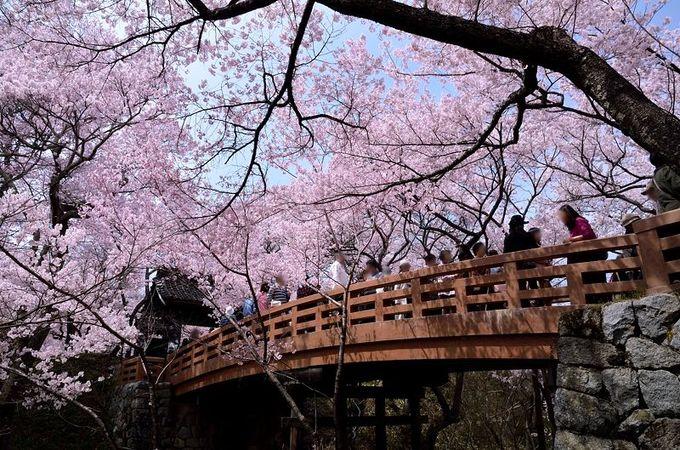 「桜雲橋」の賑わい