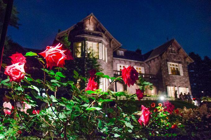 旧古河庭園のバラは「ライトアップ」も必見!