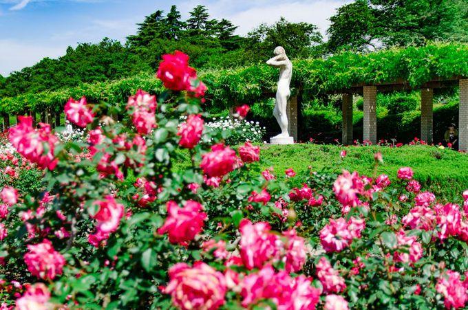 """神代植物公園で撮影したい""""彫刻""""と""""バラ""""のコラボレーション"""