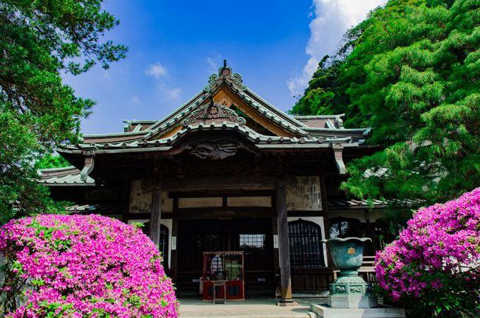 """鎌倉・安養院本堂と""""つつじ"""""""