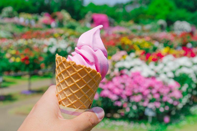 京成バラ園で食べたい!名物「バラのソフトクリーム」