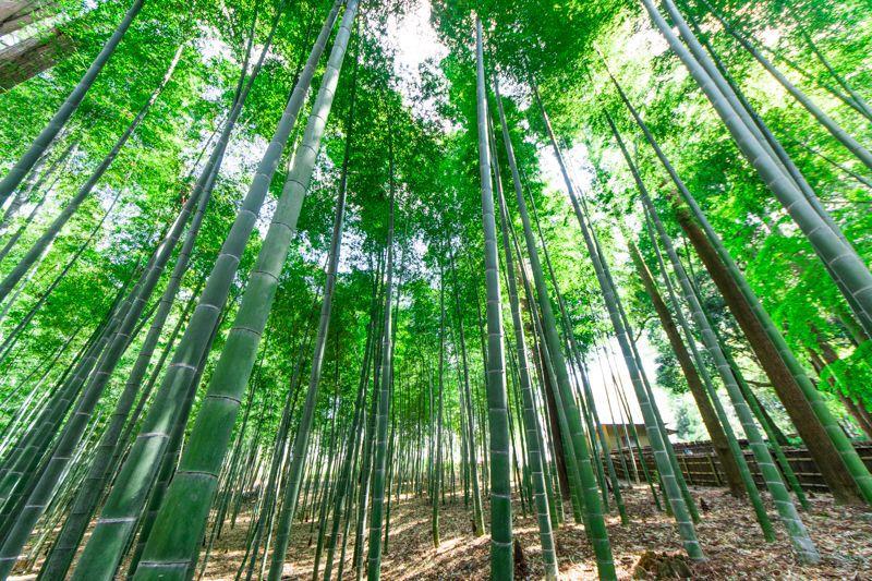 日本三名園!水戸観光の定番「偕楽園」の歴史と見どころをご紹介!