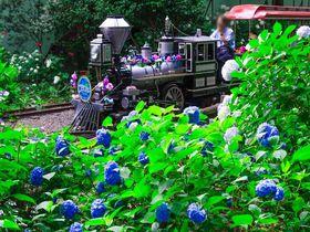 """「としまえん」の""""あじさい祭り""""が凄い!東京の梅雨を彩る花の名所を楽しもう!"""
