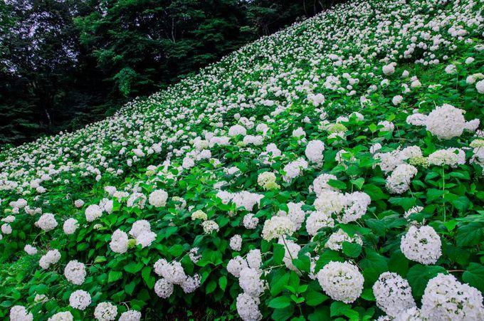 東京サマーランドの象徴!「アナベルの雪山」が凄い!