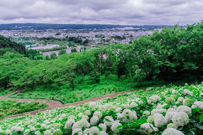 「あじさい園展望台」からの眺め