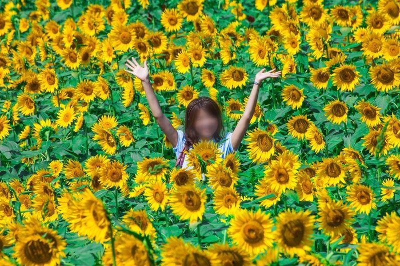 60万本の絶景!明野ひまわり畑(山梨県北杜市)は夏のお出かけに超おすすめ