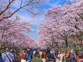 「上野公園」の桜はやっぱり凄い!東京都内随一の花見の名所