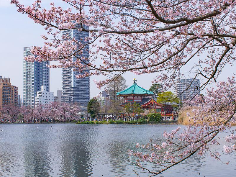 「不忍池」も観桜スポット!