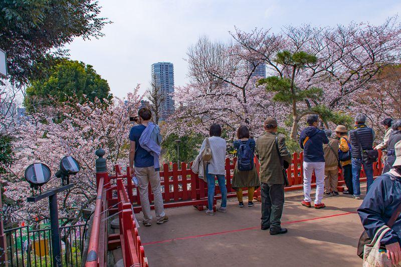「清水観音堂」は観桜の舞台!
