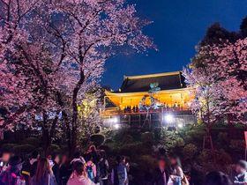 日本三大夜桜名所!上野公園の桜ライトアップは花見に絶対おすすめ!